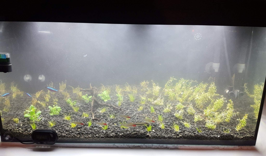Planted tank immediately after planting with cloudy water