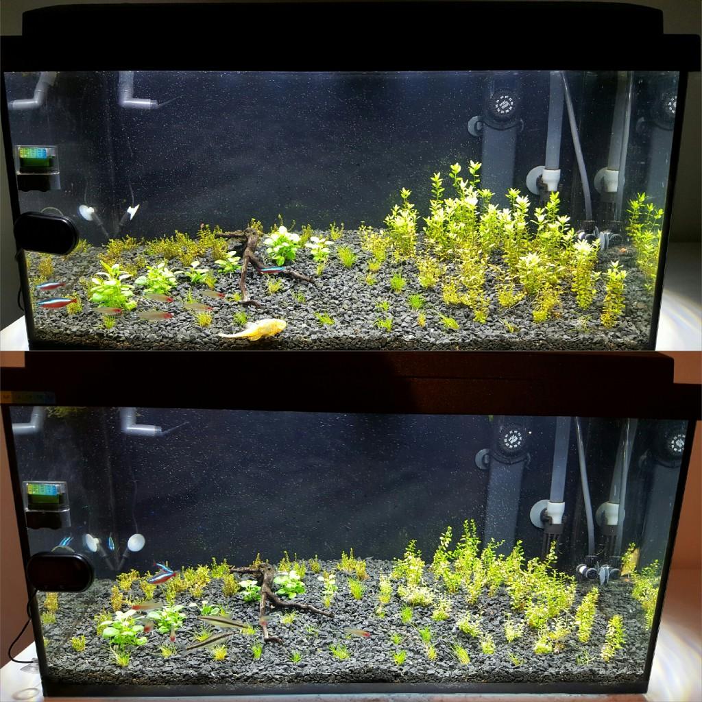 Aquarium plant growth after 7 days