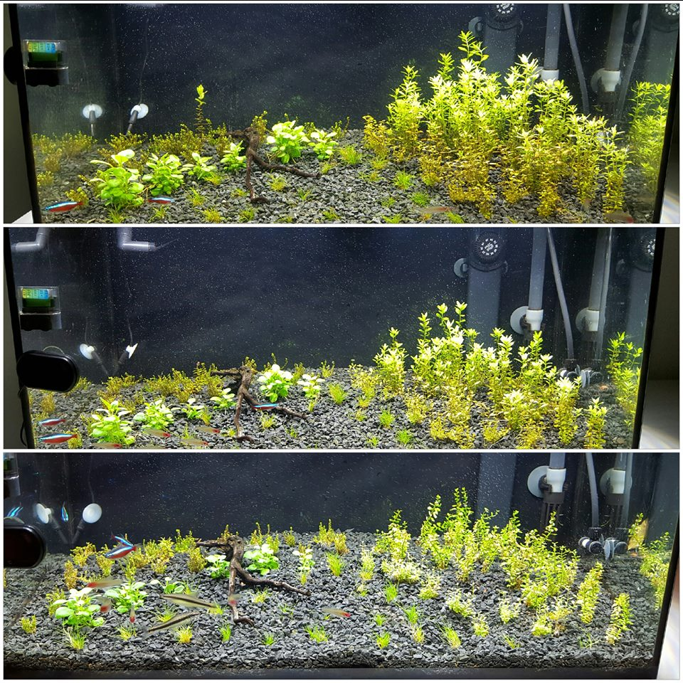 Progress after 14 days